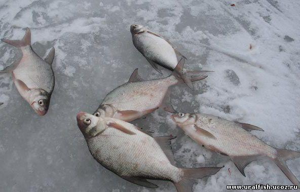 рефтинский свердловская область клев рыбы прогноз