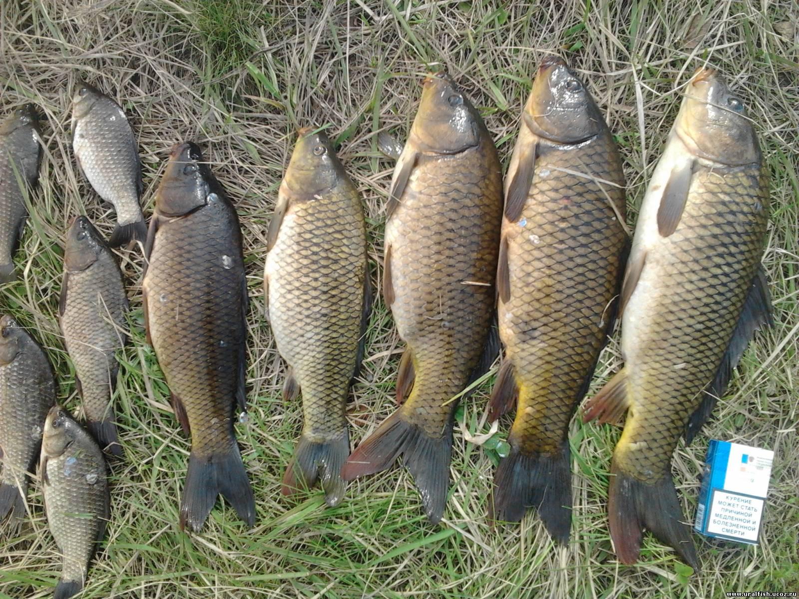Айдыкуль отчет о рыбалке